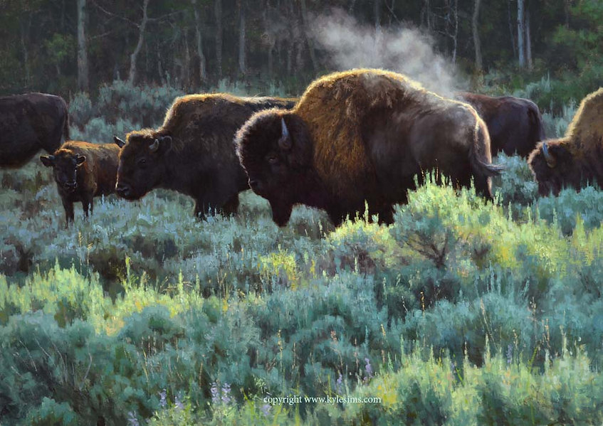 Original Bison Oil Painting for sale