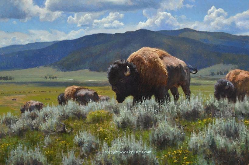 Original Bison Oil Painting for sale