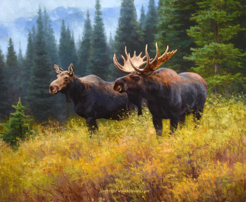 Original Moose Oil Painting for sale
