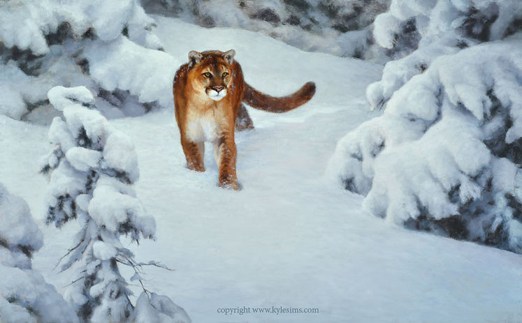 Original Mountain Lion Cougar Oil Painting for sale