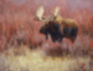 Moose original painting
