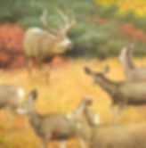 Original Mule Deer Painting