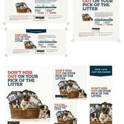 Digitial/Print Campaign