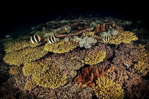 Night Reef