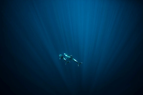 Blue Encounter