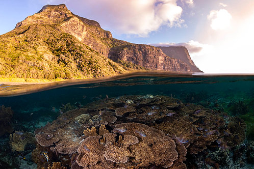 Lord Howe Rise