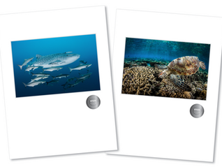 Silver Awards at the EPSON Queensland Professional Photography Awards