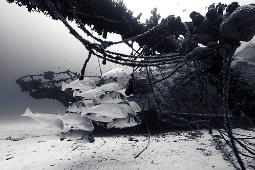 By the Wreck