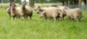 2011-07-25 dsc_0154 (1500 x 1000 px).jpg