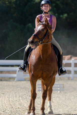 photo gallery  equestrian dressage at nc state