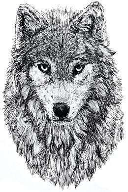 Loup ︱DISPONIBLE