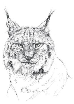 Lynx ︱DISPONIBLE