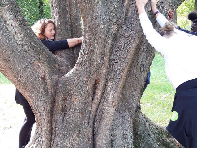 Yoga mit einem Baum und Sabine Stix in Wien