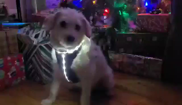Newly patented Remote controlled Doggie Vest