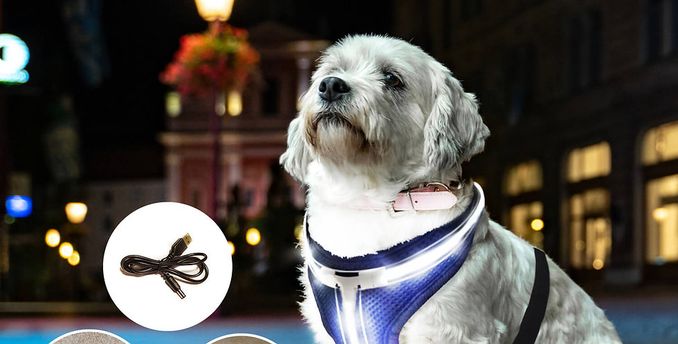 LED Dog vest, pet vest, cat vest, dog harness, cat harness