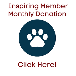 Monthly-Donors-1.png