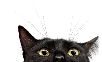 blackcat-cropped-360x220_edited.png