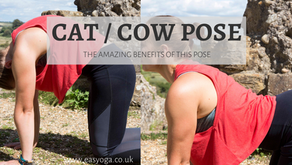 Cat / Cow Pose And The Amazing Benefits
