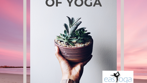 Five Myth Busters of yoga