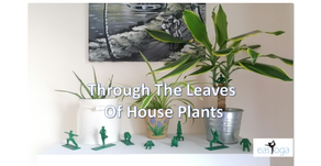 Through the leaves of House Plants