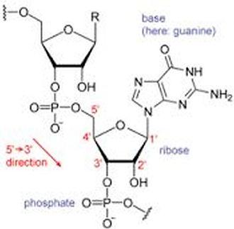 Figure 7. RNA Unit.jpg