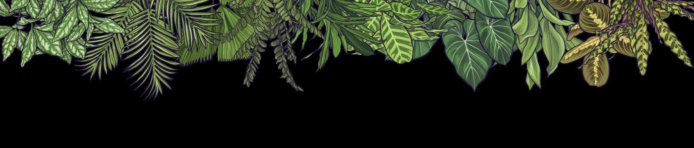 top-jungle.png