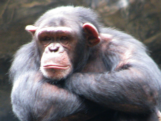 Flash fiction: Chimps, eggs & lightspeed