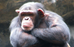 Flash fiction: Chimps, eggs & lightspeed