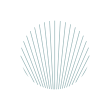 Seashell_edited_edited.png