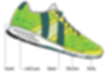 Anatomy of a athletic shoe