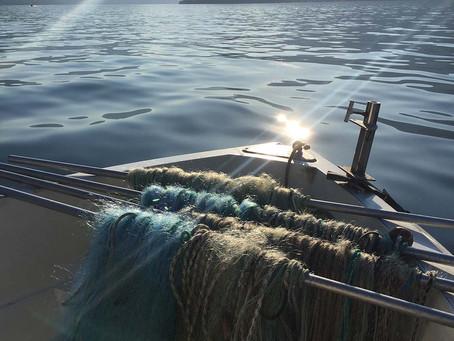 Italian Lake Fish
