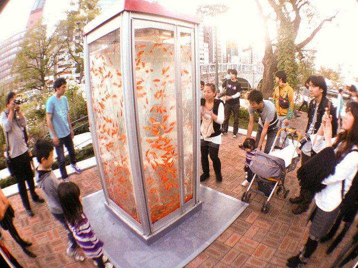 Nobuki Yamamoto's fish tank.jpg