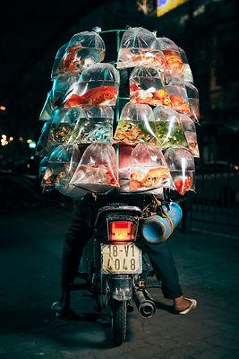 john enoch bikes of hanoi.jpg