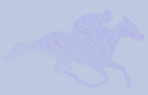 brace1 racehorse background banner.jpg