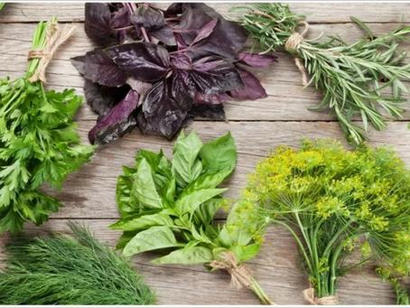 Лекция: Пряно-вкусовые овощные культуры и малораспространенные культуры