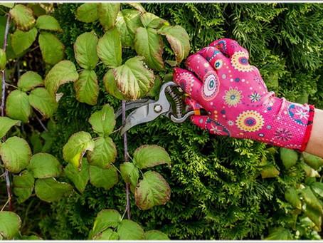 Обрезка малины осенью – простые советы для начинающих