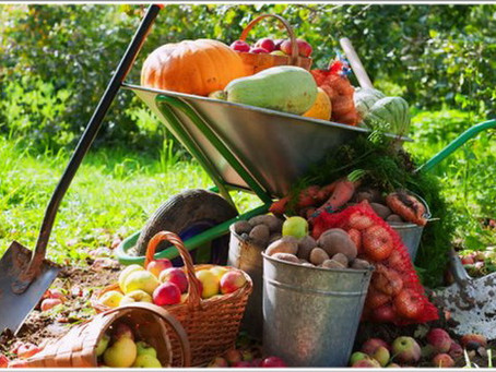 Завершаем дачный сезон правильно – рекомендации Россельхозцентра