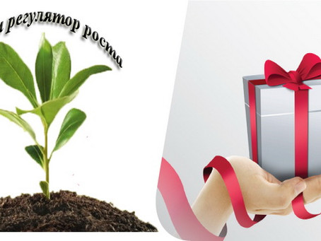 Регулятор роста в подарок