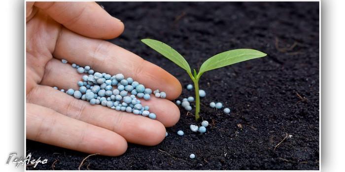внесение удобрений под растение