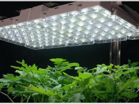 Сказка о белом свете - дает ли белый светодиод лучший результат для роста?