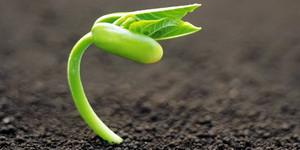 Элементы питания необходимые для роста растений.