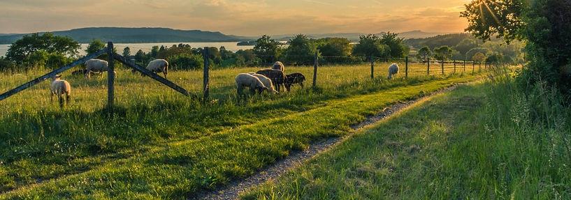 countryside-cropland-dawn-158179_edited.