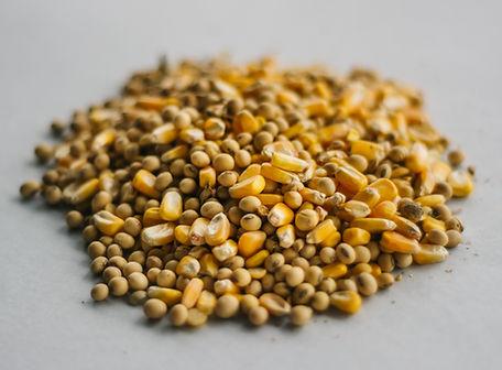 Roasted Soybean and Corn.jpg