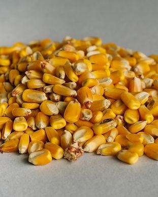 Whole Corn.jpg