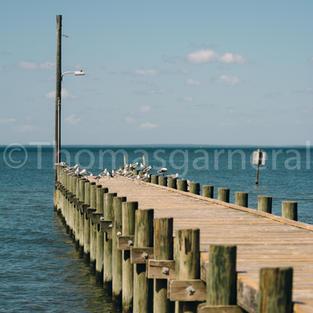 Gulf State Park Pier #2