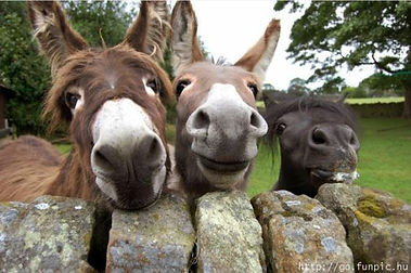 Donkeys and a poy.jpg