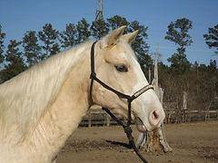 Sonora_Senorite_aka_Cleo_Pale horsejpg.j