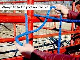 Tie_a_knot_2_edited.jpg