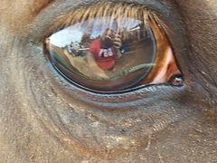 Eyejpg.jpg