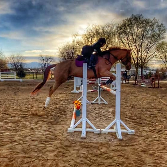 Sizzling Summer Horse Trials, Dressage and Jumper Show